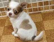 Heart Health Guilt Puppy!
