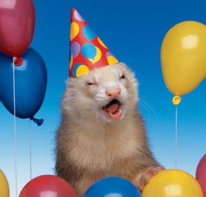 party-ferret