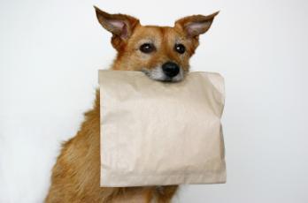 Doggie-Bag-Image