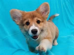 Not gulity puppy